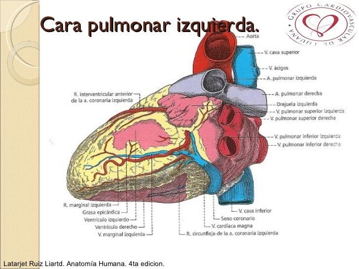 Anatomía Aplicada de Corazón