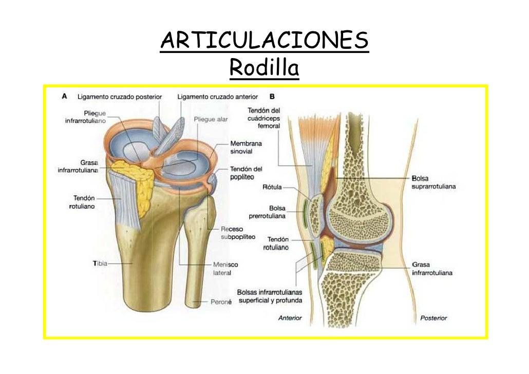 Resumen Anatomía del miembro inferior