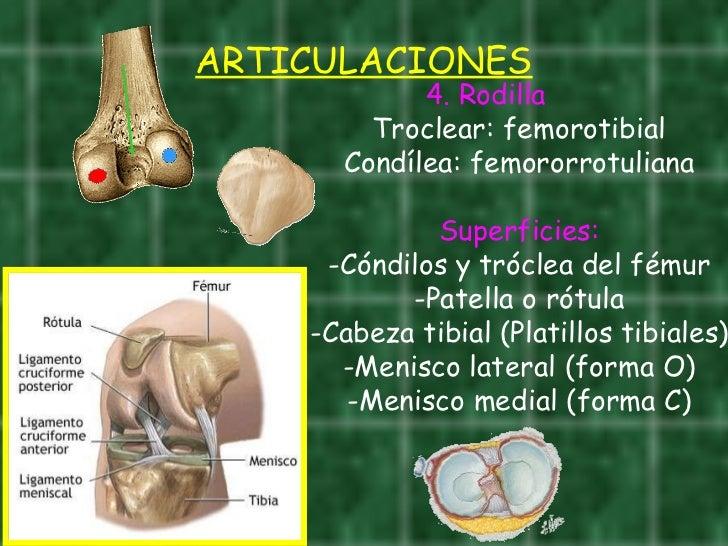 AnatomíA Del Miembro Inferior