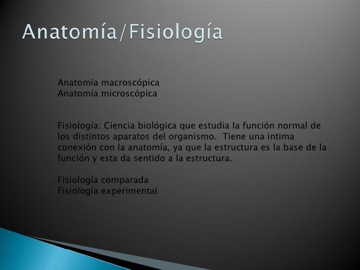 Anatomía Digestiva