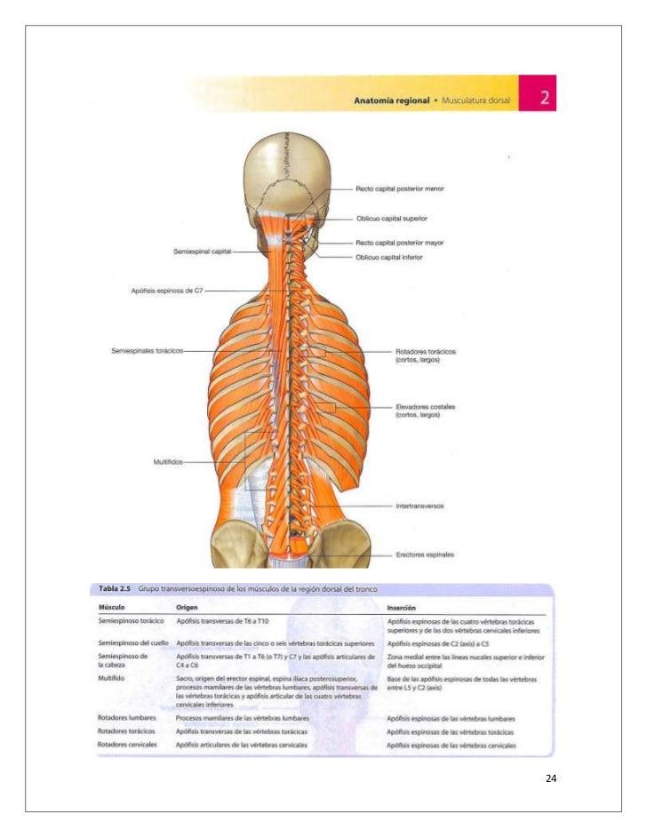Excepcional Anatomía Kenny Easterday Modelo - Anatomía de Las ...