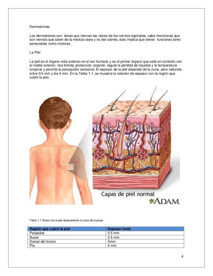 Anatomía disección