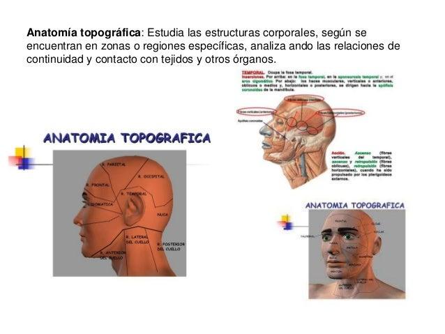 Anatomía fisiología