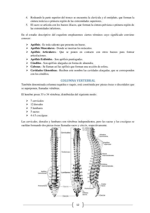 Excelente Fracturas óseas Libro De Anatomía Y Fisiología Para ...