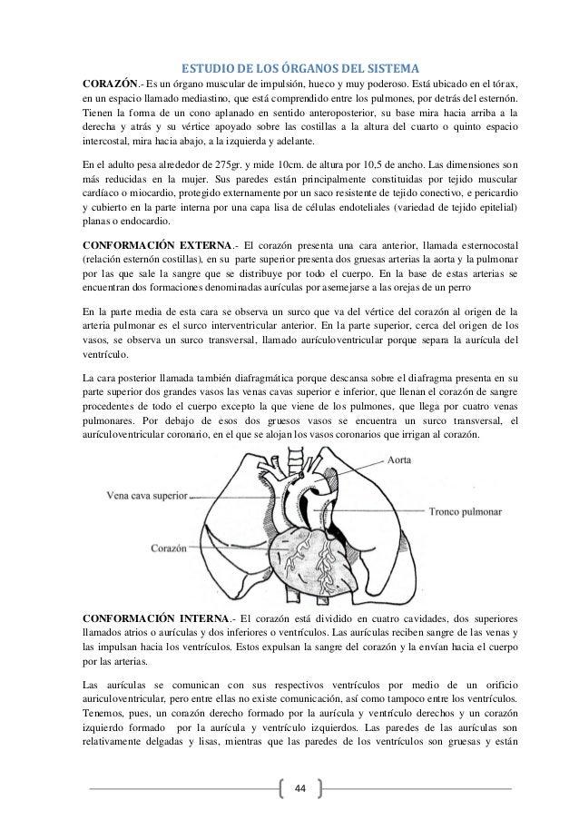 Excelente Anatomía Y Fisiología Humana Libro De Colorear El Capítulo ...