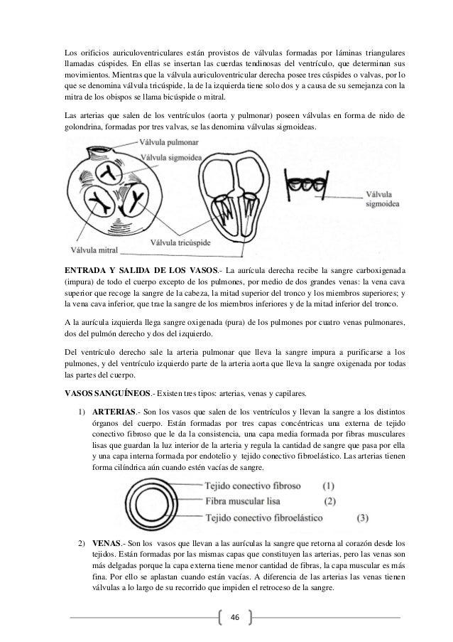 Bonito Anatomía Y Fisiología Del Libro Para Colorear Respuesta ...