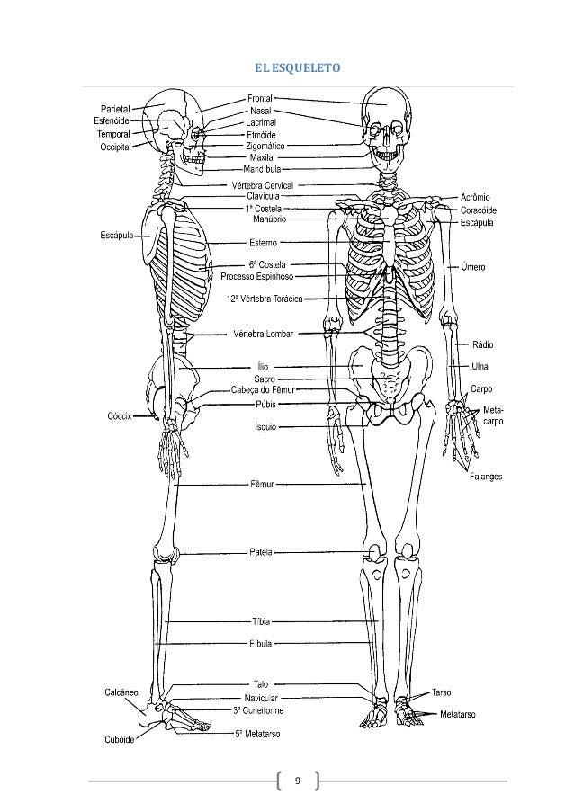 Anatomía fisiología e higiene humana