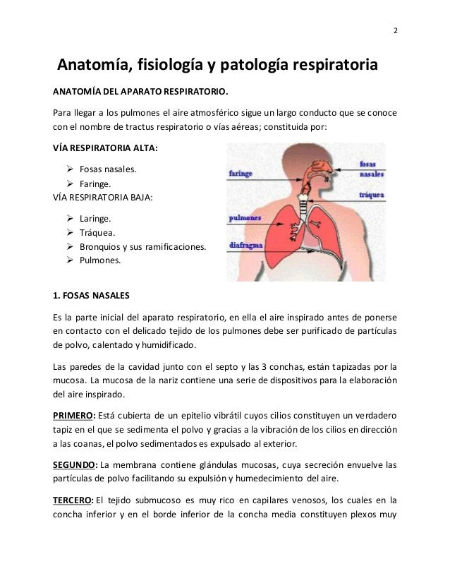 Anatomía fisiología-y-patología-respiratoria