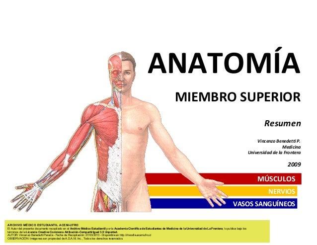 ANATOMÍA MIEMBRO SUPERIOR Resumen Vincenzo Benedetti P. Medicina Universidad de la Frontera  2009  MÚSCULOS NERVIOS VASOS ...