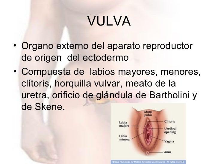 AnatomíA úTero, Vagina Y Anexos