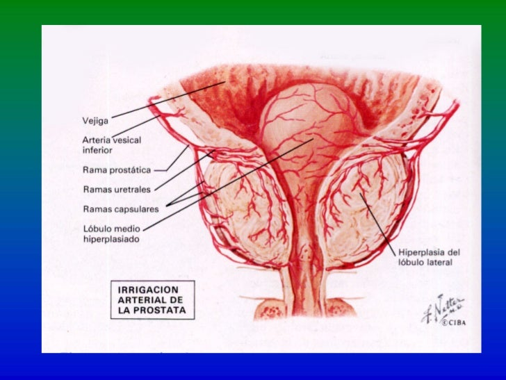 AnatomíA UrolóGica1