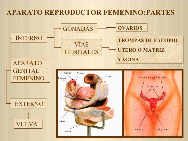 Anatomía Y Fisiología del Aparato Reproductor Femenino