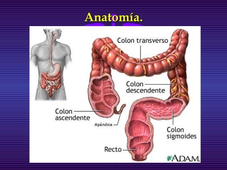 Único Anatomía Del Colon Sigmoide Regalo - Anatomía de Las ...