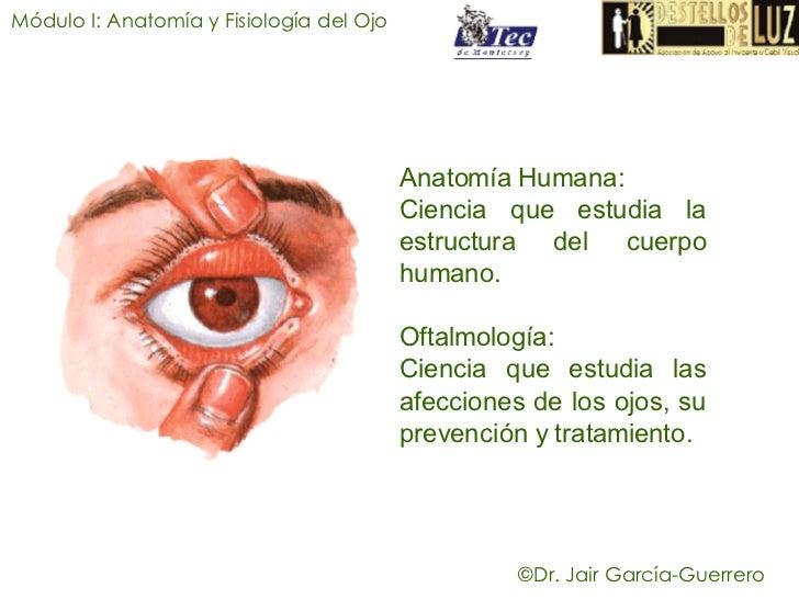Famoso La Anatomía Y La Fisiología Del Ojo Become Colección de ...
