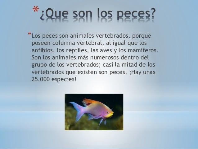 Anatomía y-fisiología-del-pez