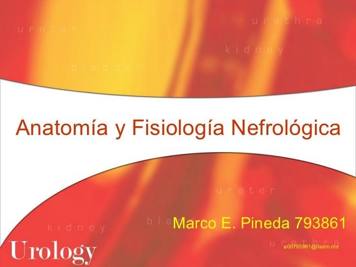 Anatomía Y Fisiología Nefrológica