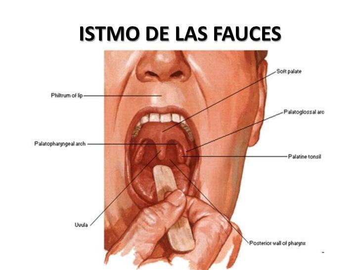 exploracion de boca y faringe pdf