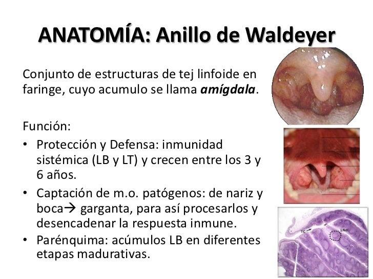 Anatomía amigdala y faringoamigdalitis