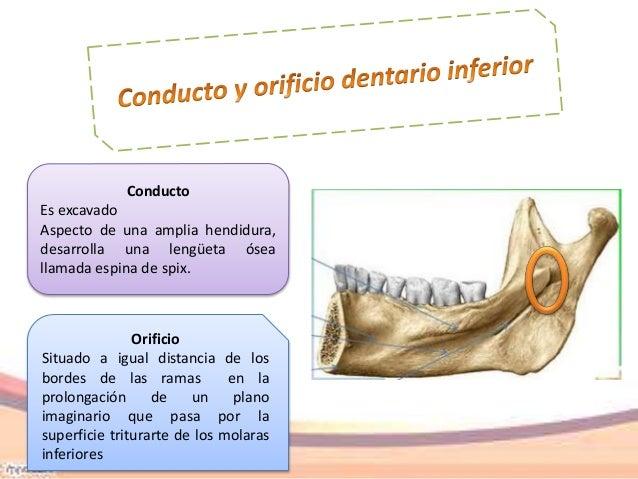 Anatomía aplicada a la anestesia