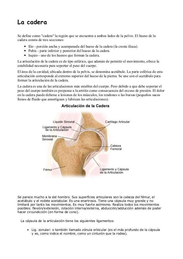 Anatomía articular, tendinosa y ligamentosa