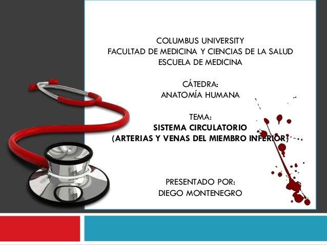 ANATOMÍA VENOSA DE LOS MIEMBROS INFERIORES