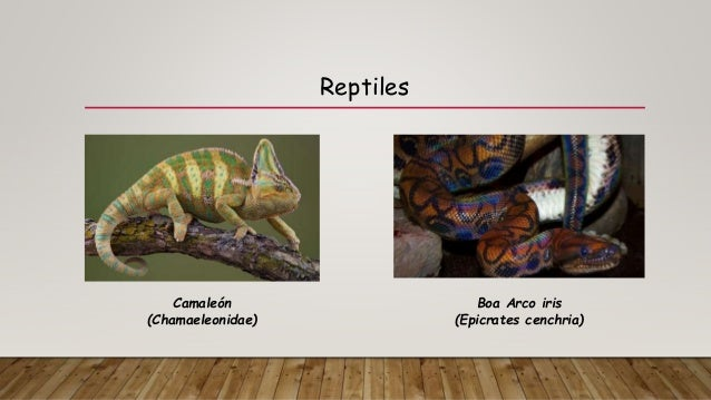 Anatomía comparada entre animales invertebrados y vertebrados