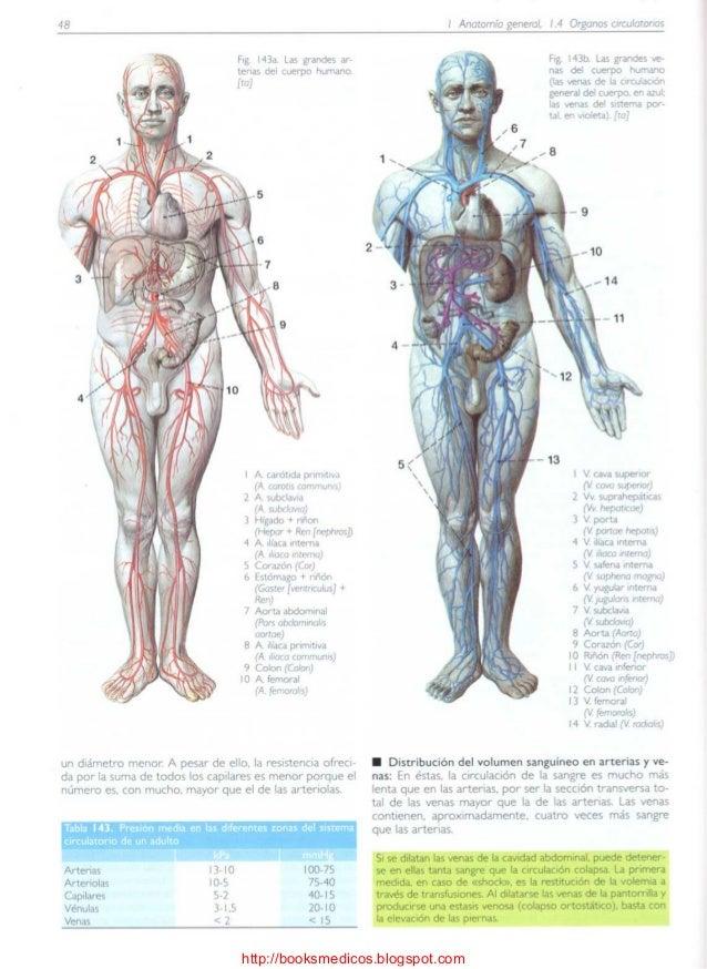 Vistoso Anatomía Interna De Cuerpo Humano Bosquejo - Anatomía de Las ...