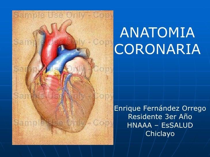 ANATOMIA<br />CORONARIA<br />Enrique Fernández Orrego<br />Residente 3er Año<br />HNAAA – EsSALUD<br />Chiclayo<br />