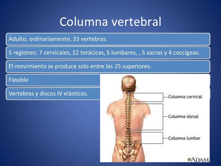Anatomía de columna lumbar