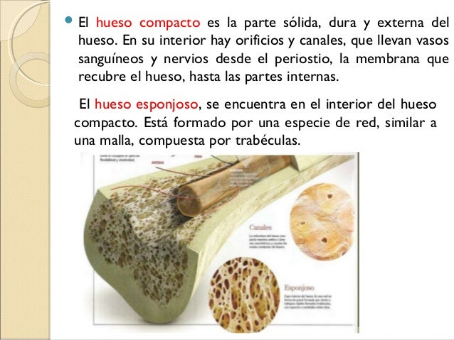 Anatomía de hueso y articulaciones