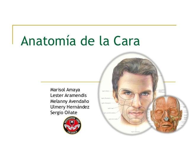Anatom a de la cara - Pistola para lacar ...