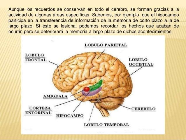 Anatomía de la cognición (rlc)