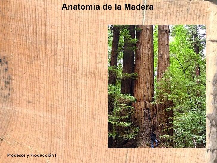 Anatomía De La Madera