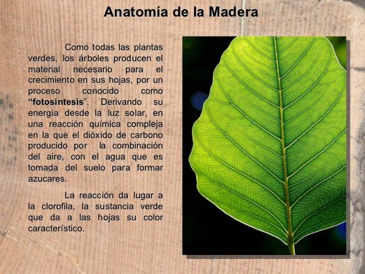Anatomía de la Madera Como todas las plantas verdes, los árboles producen el material necesario para el crecimiento en sus...