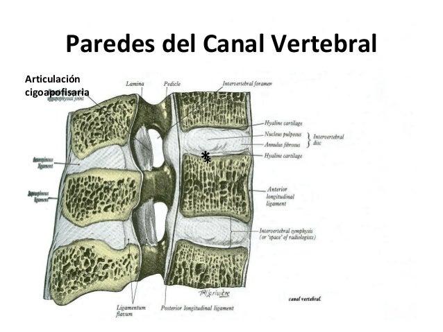 Anatoma de la_medula_espinal