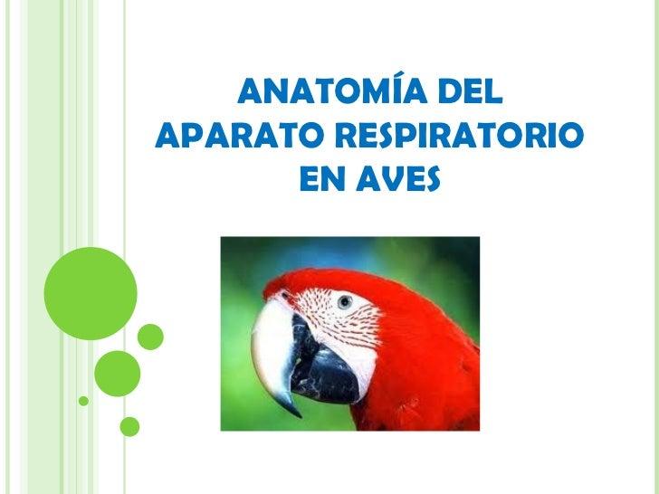 Anatomía del aparato respiratorio en aves