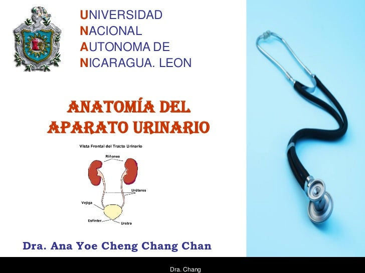 UNIVERSIDAD        NACIONAL        AUTONOMA DE        NICARAGUA. LEON     ANATOMÍA DEL   APARATO URINARIODra. Ana Yoe Chen...