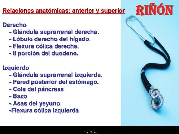 Relaciones anatómicas: anterior y superior   RIÑÓNDerecho  - Glándula suprarrenal derecha.  - Lóbulo derecho del hígado.  ...