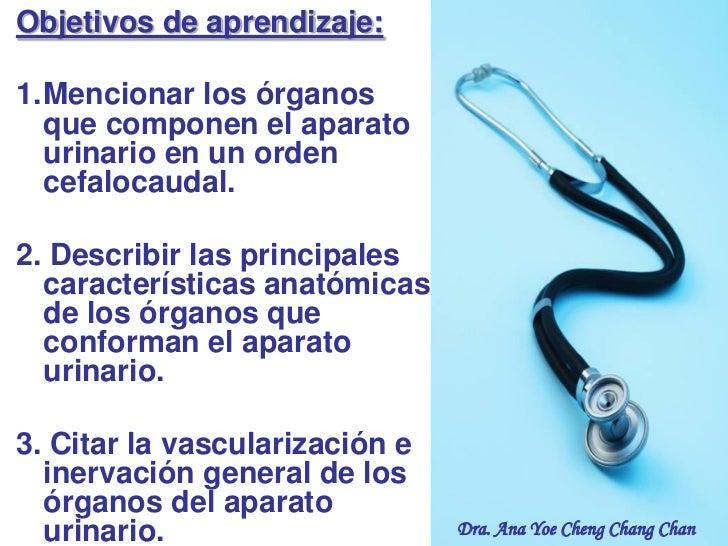 Objetivos de aprendizaje:1.Mencionar los órganos  que componen el aparato  urinario en un orden  cefalocaudal.2. Describir...