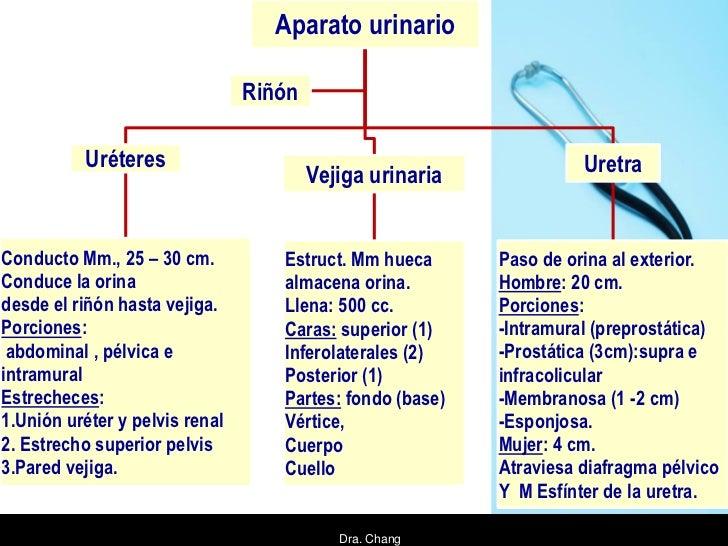 Aparato urinario                                Riñón          Uréteres                                                  U...