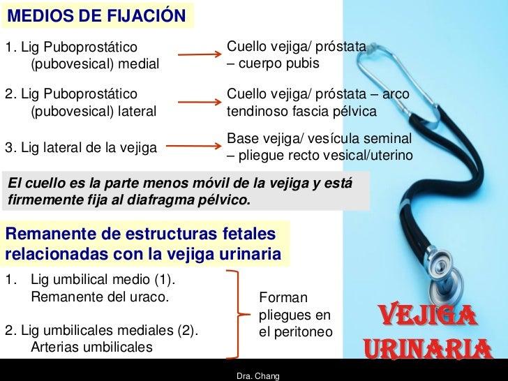 MEDIOS DE FIJACIÓN1. Lig Puboprostático              Cuello vejiga/ próstata     (pubovesical) medial          – cuerpo pu...