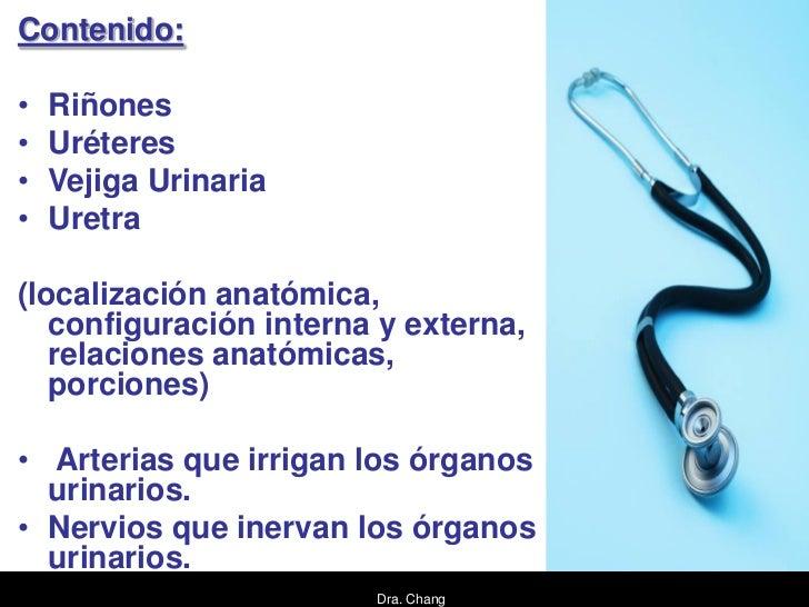 Contenido:•   Riñones•   Uréteres•   Vejiga Urinaria•   Uretra(localización anatómica,   configuración interna y externa, ...