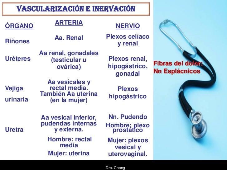 VASCULARIZACIÓN E INERVACIÓN                ARTERIAÓRGANO                                 NERVIO               Aa. Renal  ...