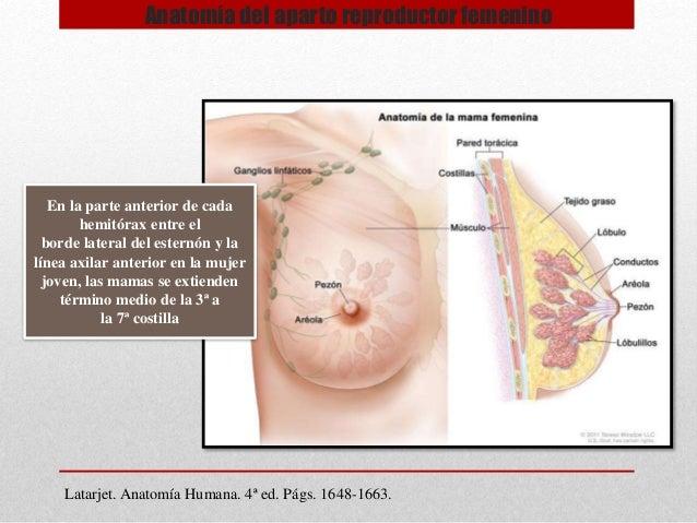 Anatomía del aparto reproductor femenino