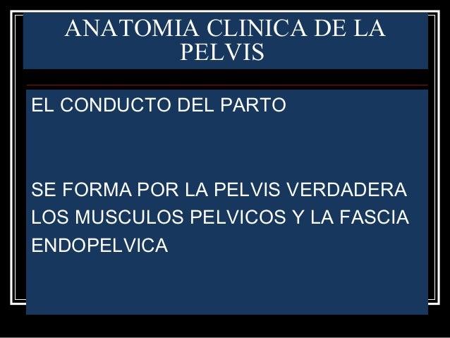 ANATOMIA CLINICA DE LA PELVIS EL CONDUCTO DEL PARTO SE FORMA POR LA PELVIS VERDADERA LOS MUSCULOS PELVICOS Y LA FASCIA END...
