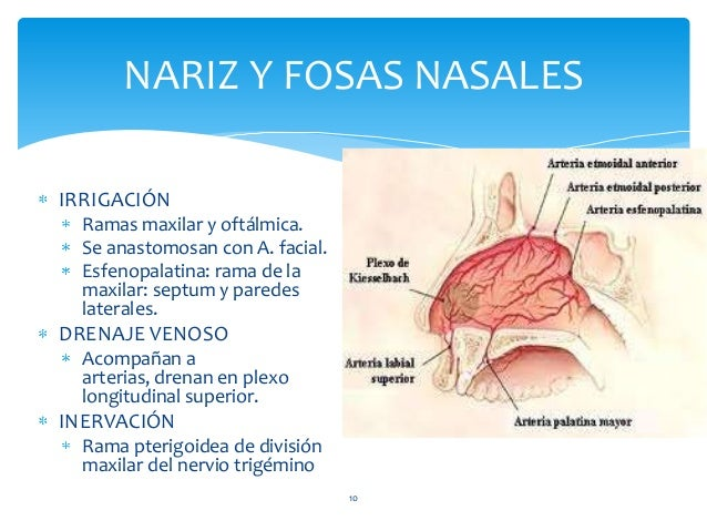 IRRIGACIÓN Ramas maxilar y oftálmica. Se anastomosan con A. facial. Esfenopalatina: rama de la maxilar: septum y paredes l...