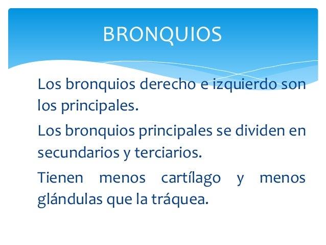 BRONQUIOS Los bronquios derecho e izquierdo son los principales. Los bronquios principales se dividen en secundarios y ter...