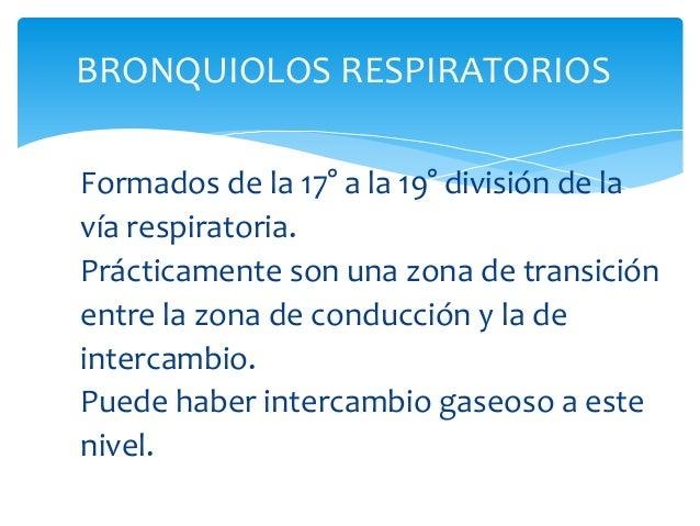 BRONQUIOLOS RESPIRATORIOS Formados de la 17° a la 19° división de la vía respiratoria. Prácticamente son una zona de trans...