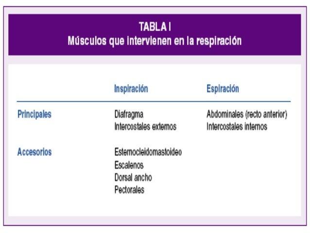 ANATOMÍA NIÑO ADULTO RELACIÓN CABEZA/CUERPO ¼ 1/8 LENGUA Mayor tamaño en relación a cavidad oral GLOTIS C3RNPt C3-C4  Ni...