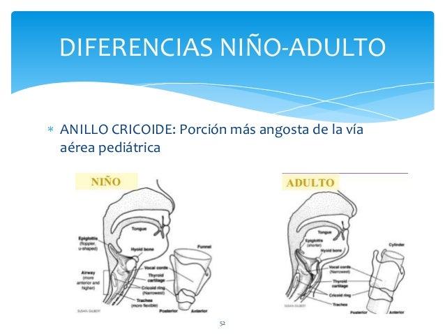 Anatomía de la vía aérea del niño y el adulto